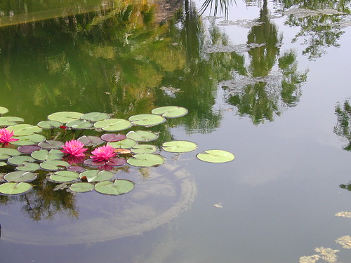 Balboa Lilly Pond