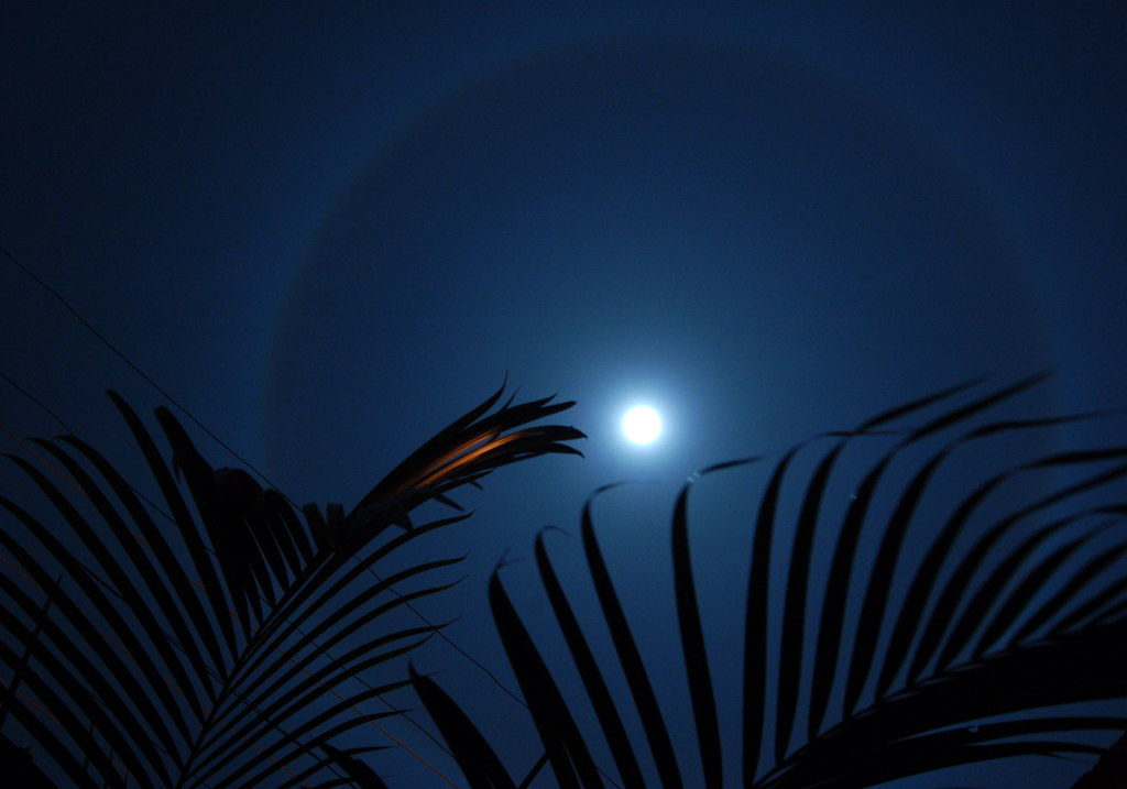 The Moon's Halo - Palm 2
