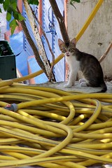 Hose pipe and cat