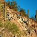 desert slopes