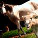Donkey breath by Tennessee_Gator