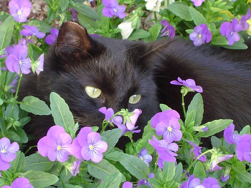 Cat Hiding in Flowers
