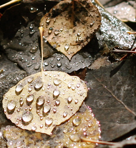 River Drops on Autumn Leaves
