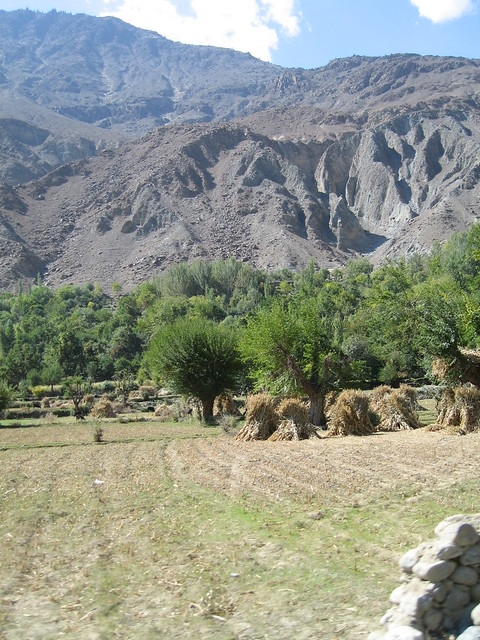 Fertile farmlands, orchards and the harvest - approaching Gilgit