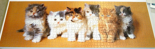 Six Persian Kittens - Finished!