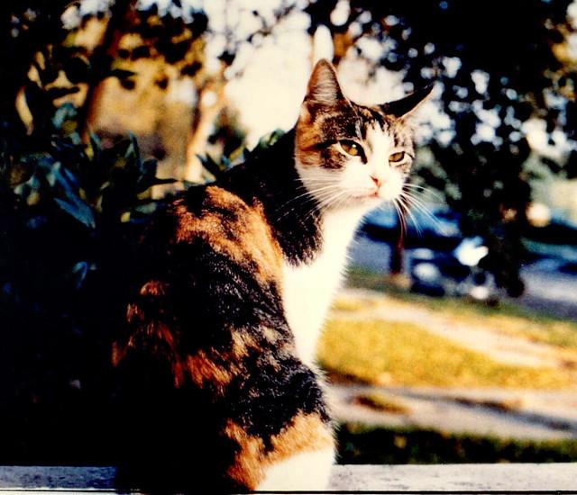 Geraldine, Calico Cat