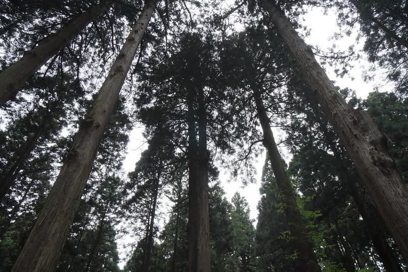 杉の巨木に覆われる御岩神社