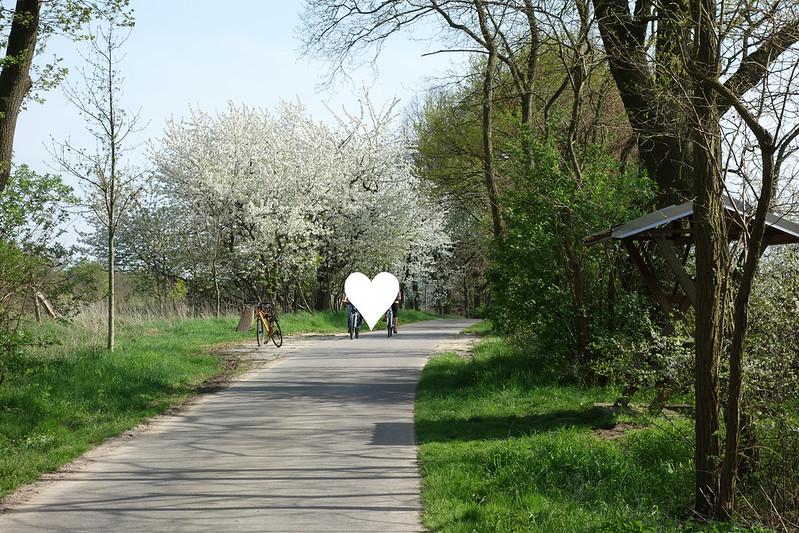 Zwischen Neuruppin und Wustrau geht es über eine einsame Straße an schönen Alleen entlang.