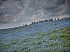 Photo:みはらしの丘で XI By jun560