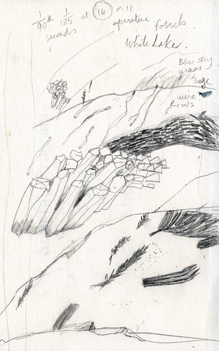 Sketch of Fossils for Printmaking