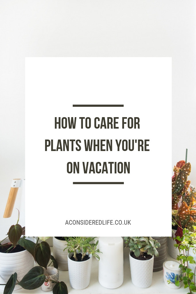 Taking Care Of Houseplants When On Vacation