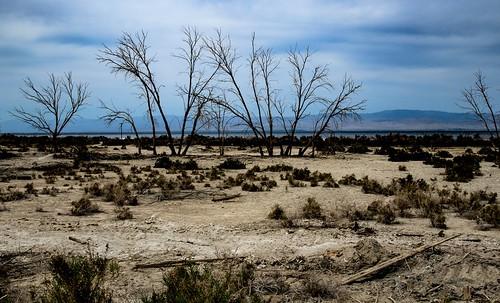 Salton Sea Shoreline