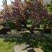 Irvine Old Parish Churchyard (267)