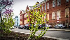 2018.04.28 Historic Vermont Avenue NW, Washington, DC USA 01577