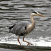 Heron River Dee 2