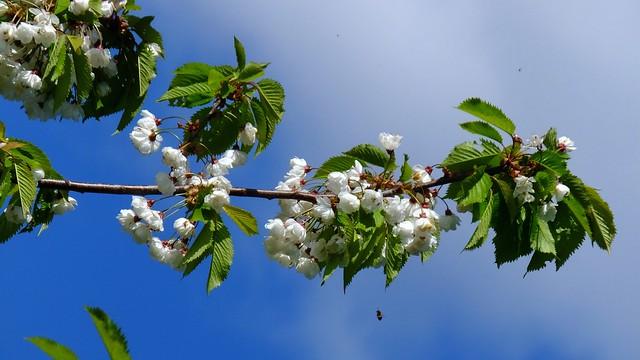spring petals 03