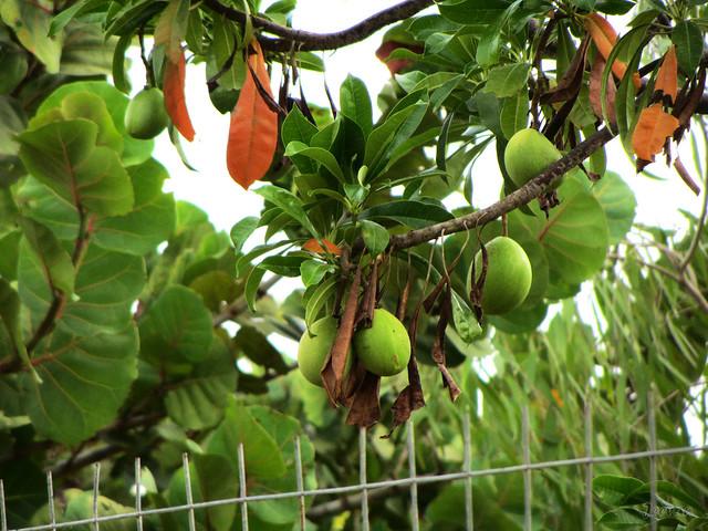 Season's Fruit