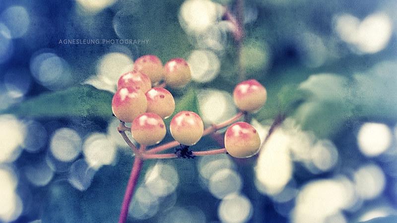 4-fruits-sep-2017
