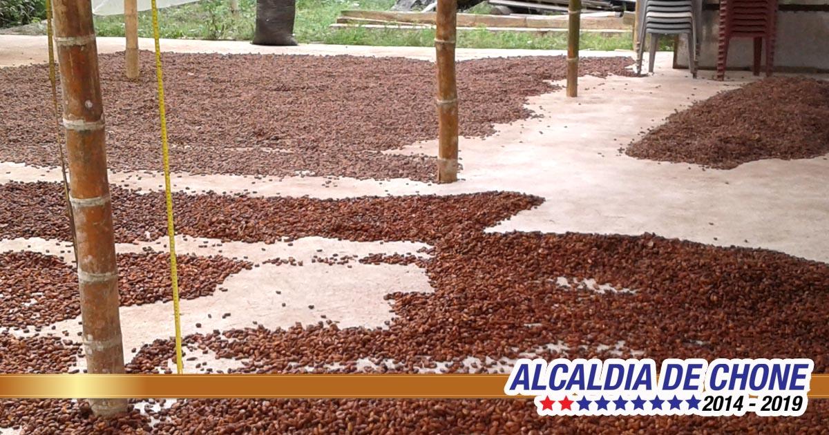 Gobierno local apoya a cacaoteros