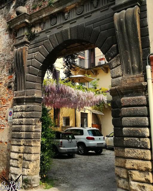 Wisteria, portico