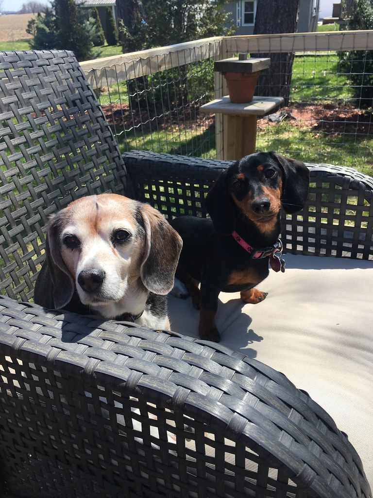 Pet Selfie - Daisy & Zola