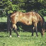 20180514-163737 - Spring Horse Bokeh