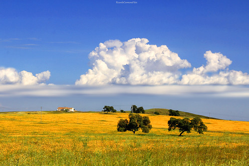 Campo andaluz - Andalusian countryside  # 03