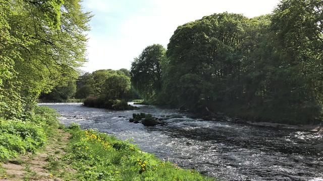 Danestone Country Park - Aberdeen Scotland - 17/5/2018