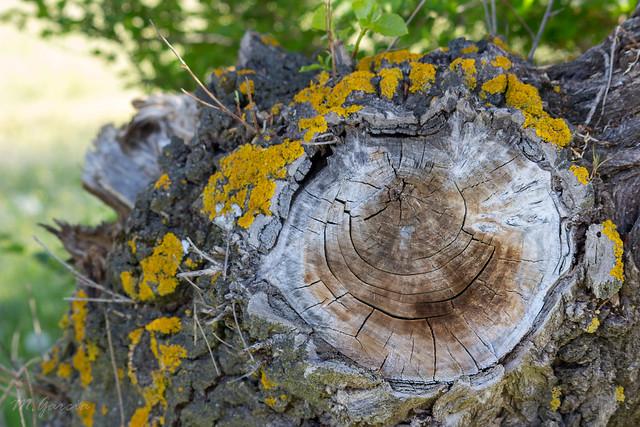 Yellow moss