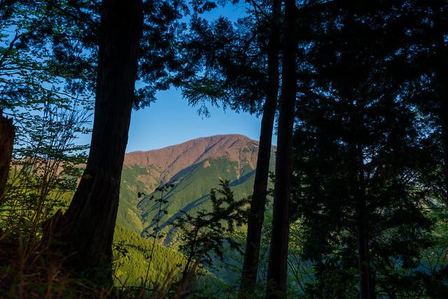 木々間から大室山