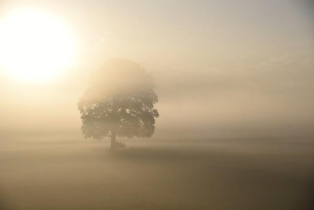 Mystical oak
