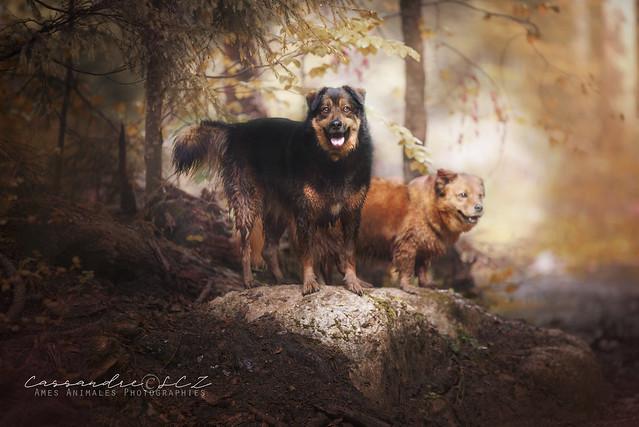 Âmes Animales Photographies 41114180165_eeae5f0c47_z