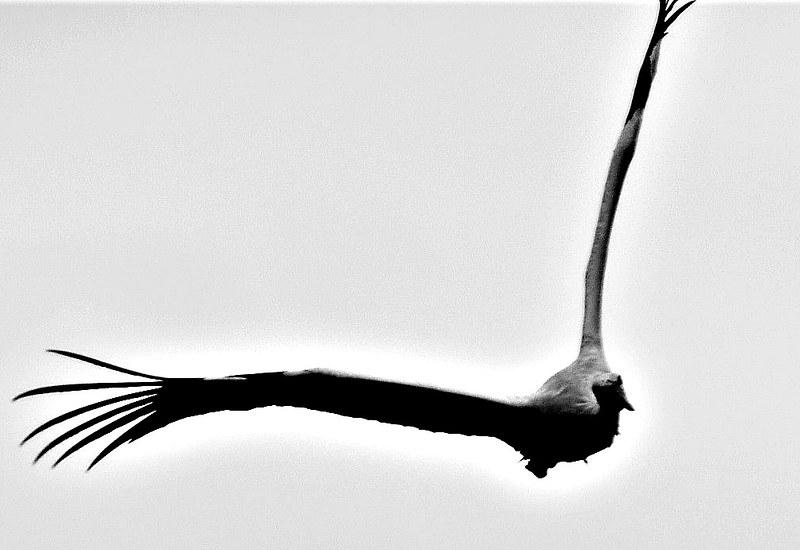 Stork 02.05.2018