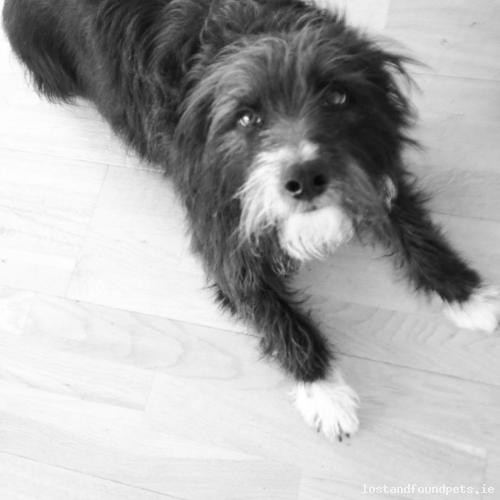 Wed, May 9th, 2018 Lost Male Dog - Unnamed Road, Fanore, Clare