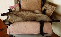 Bijou in relax mode .