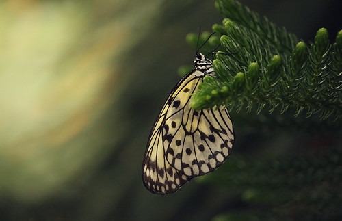 nature montreal butterfly light green texture canon dof t5i sunset dusk animals flora blur canada