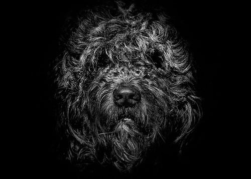 Ziggy Portrait No 1