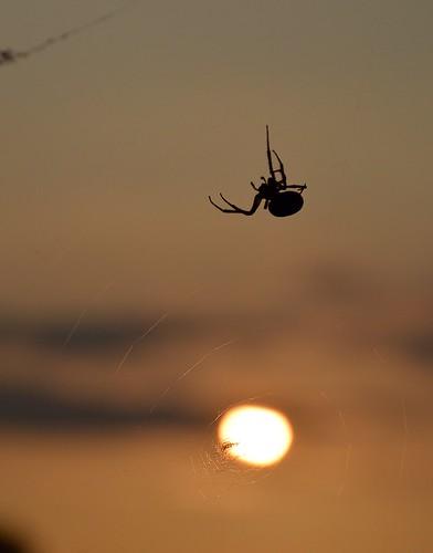 Arbeiterin vor Sonnenuntergang