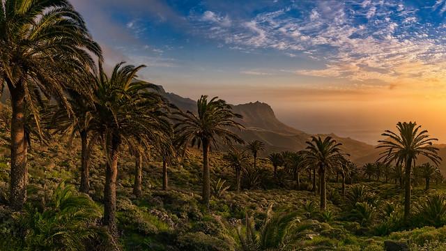 Palm Grove Near Tazo
