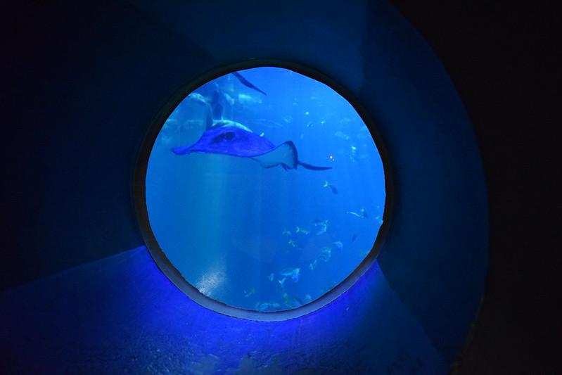 Aqua Planet (9)