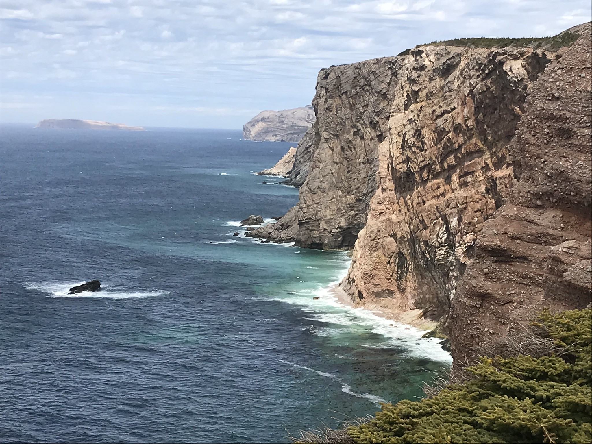 Seabirds nests on cliffs of Cape St. George, Newfoundland, May 2018 Photo Credit: USFWS