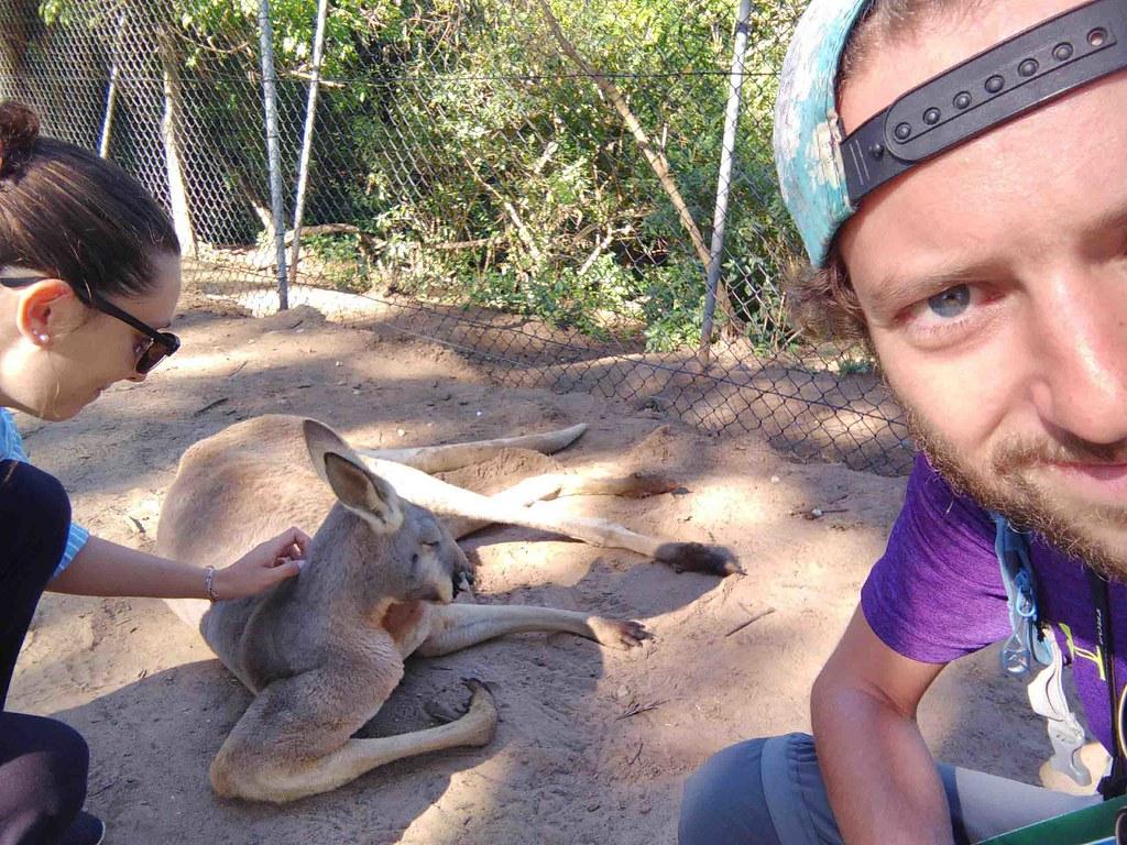 Brisbane - Défi - Caresser un kangourou