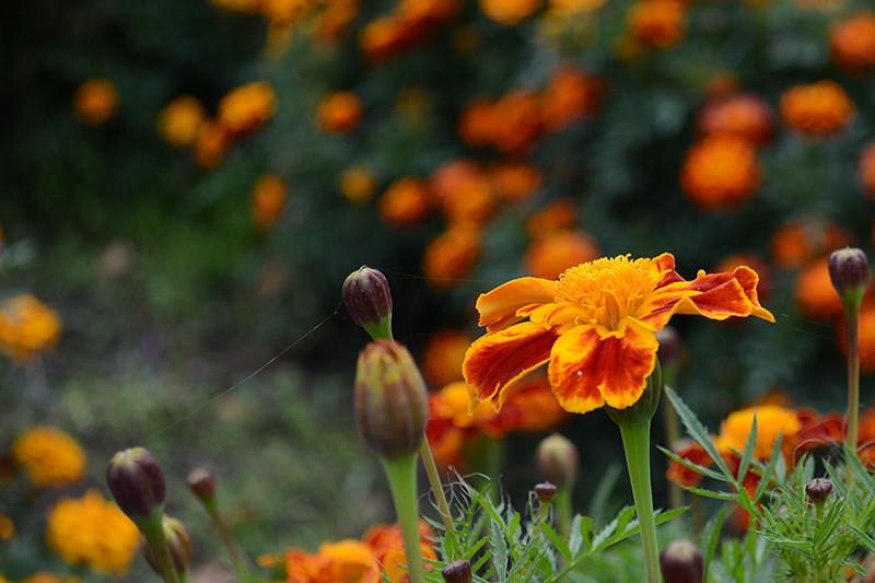 цветы дождь 27