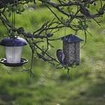 20180424-183015 - Vogel Futterstelle Garten Bokeh