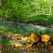 Wood pile and bluebells at Brocket Park