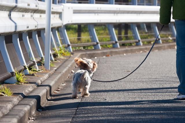 ワクチンが完了して散歩デビューした犬