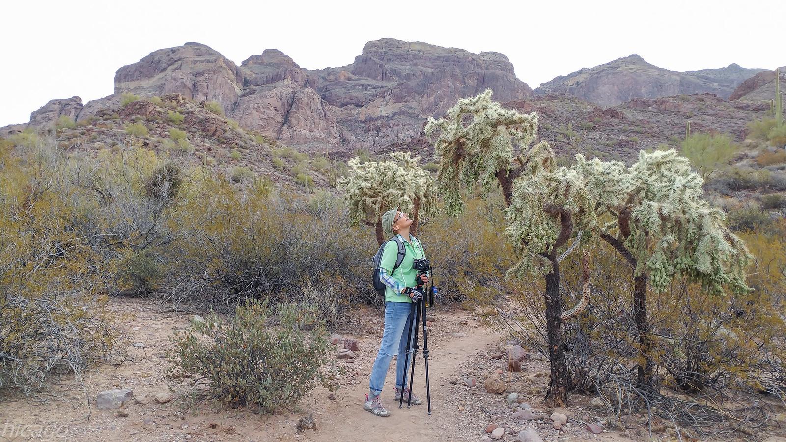 Южная Аризона - Donde vive el cactus?