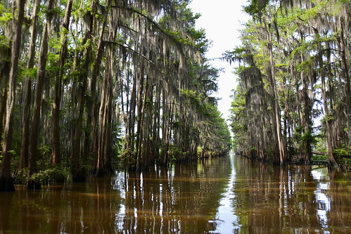 uncertain uncertaintx texas usa outdoor landscape landscapes caddolake lake water tree trees cypresstree reflection green spring moss tillandsiausneoides spanishmoss sky wood forest river