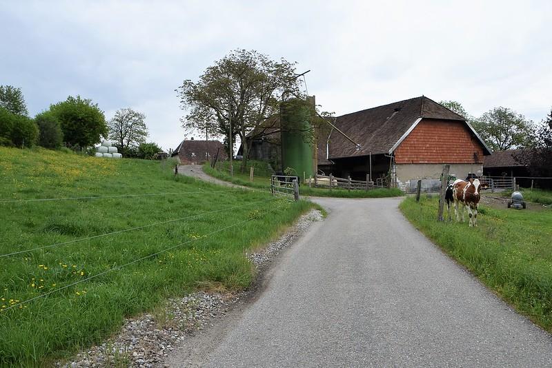 Feldbrunnen 02.05 (1)