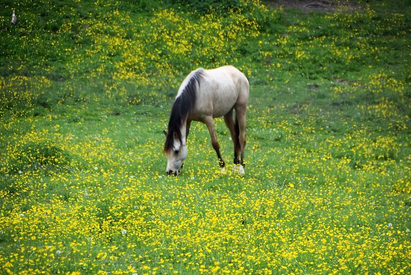 Horses 02.05 (1)